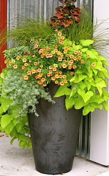 Poolside Gardening- Keeping Bugs Away. Potted plants help on decks and around pools.
